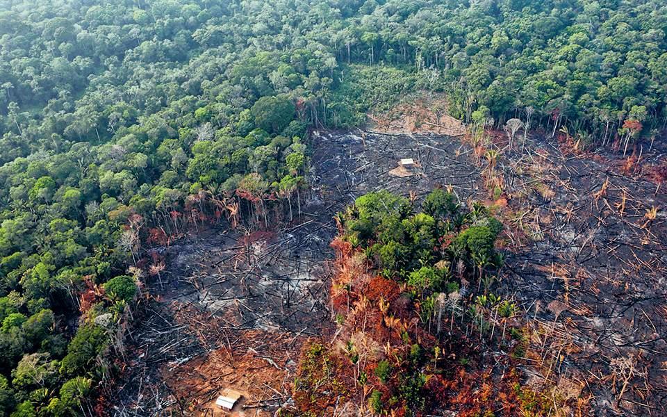 Την μεγαλύτερη αποψίλωση της δεκαετίας υπέστη ο Αμαζόνιος